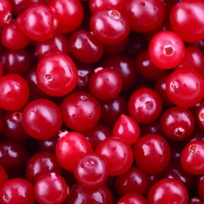 Chris Kilham came by Dr. Oz to talk about the benefits of cranberries, which he says can help protect against every disease. He also discussed how to eat them.