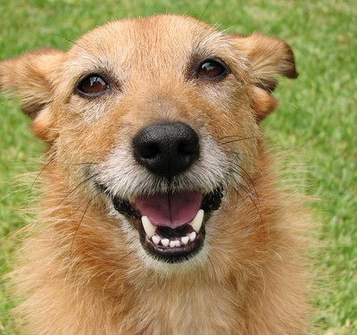Dr Oz: Preventing Dog Gum Disease & Dallas 2012 TV Series Review