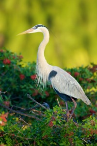 Ellen's Damn Heron: Week In Review