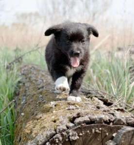 Best Dog Breeds, Pet Nutrition & Obedience Training Advice