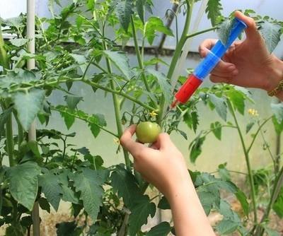 Dr Oz Memory Test & GM Food Labeling: Dr Oz October 17 2012 Recap