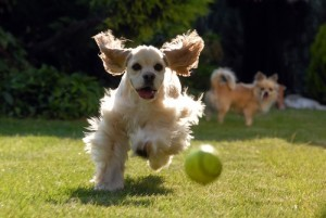 Top Dog Names of 2012 & People Magazine Half Their Size Weight Loss