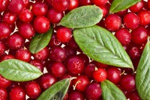 Dr Oz: Slow Thyroid, Chris Kilham Cranberries + Home Superfood Detox