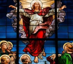Best of Dr Oz: What Would Jesus Eat, GMO Fish & Plastic Surgery Quiz