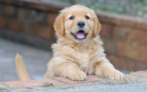 On May 12, 2015, Dr. Oz will talk about the right dog food brands for your dog and which ones could be dangerous for the little guy. (johannviloria / Shutterstock.com)