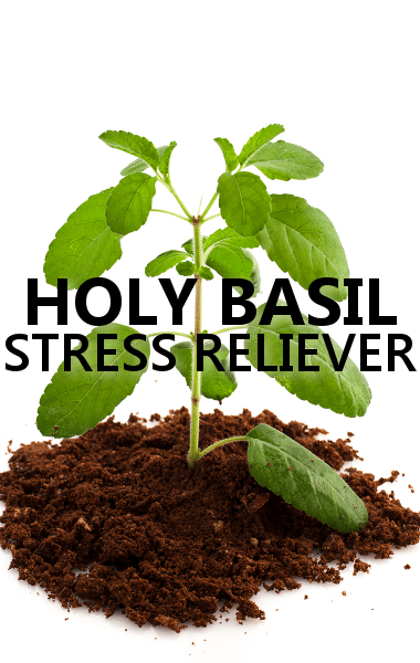 Dr Oz: Holy Basil Supplement Review & The Supercharged