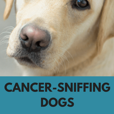 Dr Oz: Cancer-Sniffing Dogs + At-Home Alzheimer's Smell Test