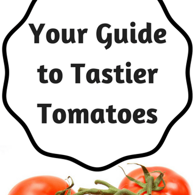 Dr Oz: Find Juicy, Flavorful Tomatoes + Savory Oat Recipe Ideas