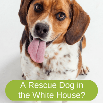 Dr Oz: Eric & Lara Trump Fight Against Puppy Mills to Rescue Dogs