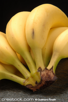 Close-up shot of a bunch of bananas