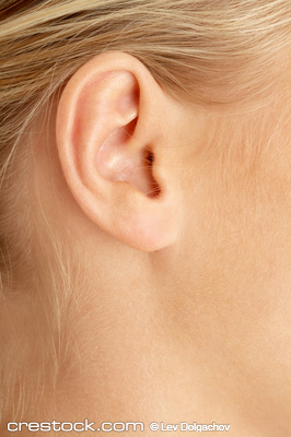 Ear of blond from crestock creative images