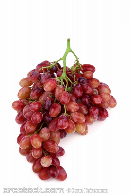 red grapes in bundle on a white background